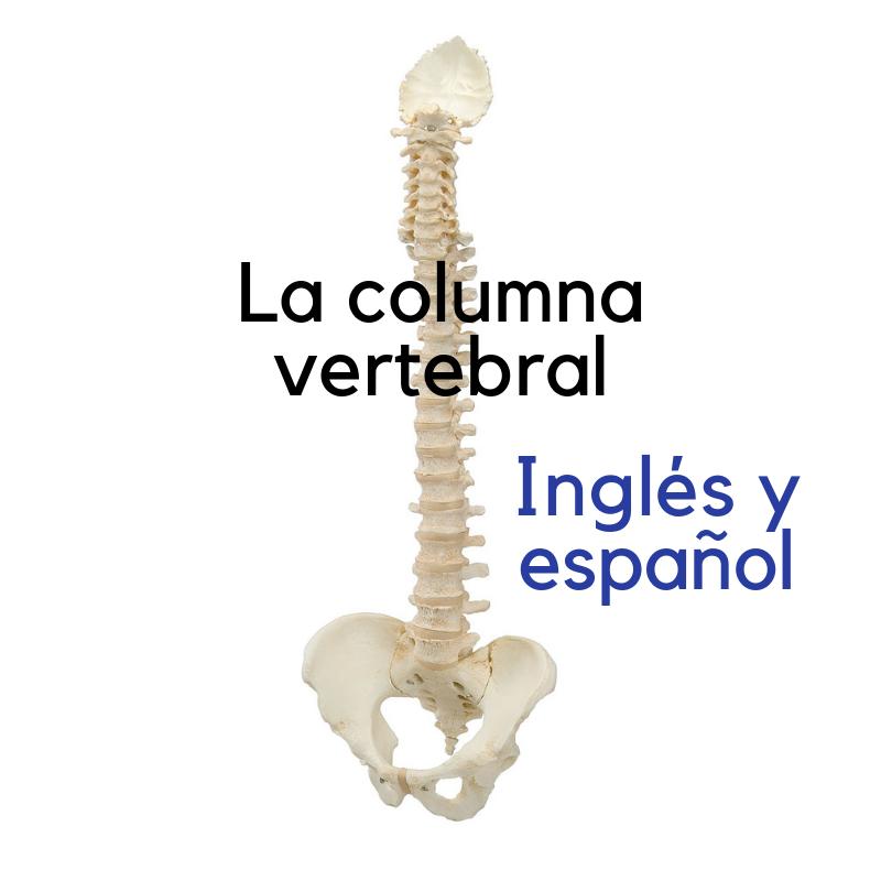 Recorded Webinar - Get To Know - La columna vertebral (ES/EN)