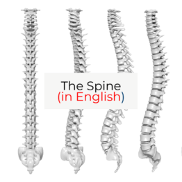 The spine