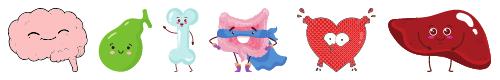 blog cute anatomy